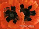 Oriental Poppies 1928 - Georgia O'Keeffe