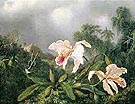 Jungle Orchids and Hummingbirds - Martin Johnson Heade