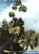 Palm Trees Florida - Winslow Homer
