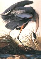 Great Blue Heron 1821 - John James Audubon
