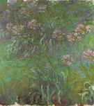 Agapanthus 1916 - Claude Monet