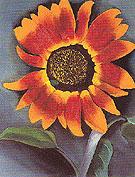 Sunflower 1921 - Georgia O'Keeffe