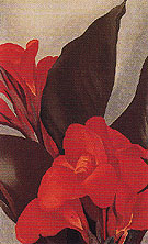 Cannas 1919 - Georgia O'Keeffe