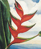 Crabs Claw Ginger Hawaii 1939 - Georgia O'Keeffe
