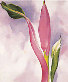 Pink Ornamental Banana 1939 - Georgia O'Keeffe