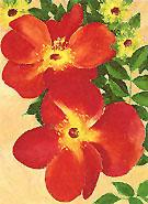 Austrian Copper Rose 2 1957 - Georgia O'Keeffe