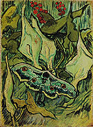 Emperor Moth May 1889 - Vincent van Gogh