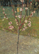 Almond Tree in Blossom 1888 - Vincent van Gogh