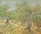 Olive Orchard Saint Remy 1889 - Vincent van Gogh