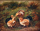 Chicks Group of Chickens 1864 - Arthur Fitzwilliam Tait