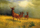 Deer in a Field - Albert Bierstadt