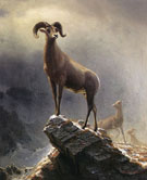 Rocky Mountain Sheep - Albert Bierstadt