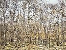 The Beech Tree Forest 1885 - Ferdinand Hodler