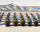 Orange Grove 1966 - Wayne Thiebaud