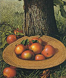 Straw Hat with Apples - Levi Wells Prentice
