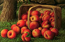 Peaches Spilling from a Basket - Levi Wells Prentice