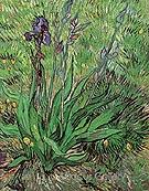 The Iris St Remy - Vincent van Gogh